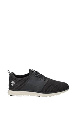 Timberland Sneakers Homme Cuir Gris