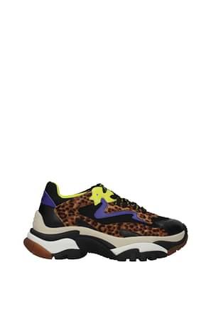 Ash Sneakers addict Donna Pelle Nero Leopardato